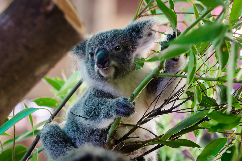 Koala Baby  Pocket Organizer Natural