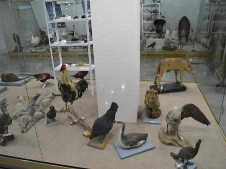 eco museum obiective turistice ruse 4