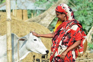 Woman Dairy Farmer in Bangladesh | by IFPRI