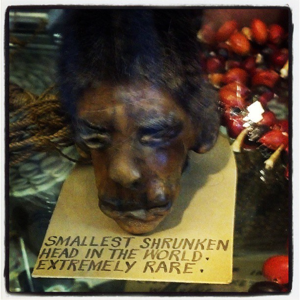quotsmallest shrunken head in the world extremely rare quot ye