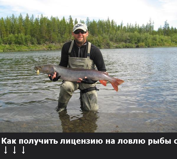 лицензия на ловлю рыбы сетями цена