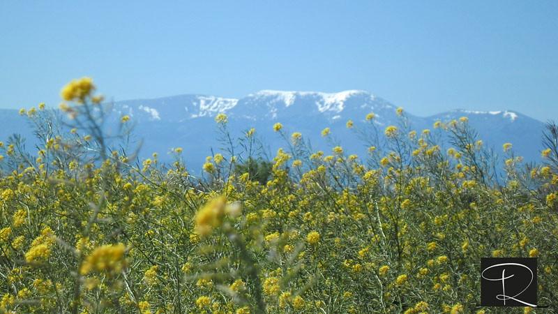 Campos amarillos | Campos con flores amarillas ...