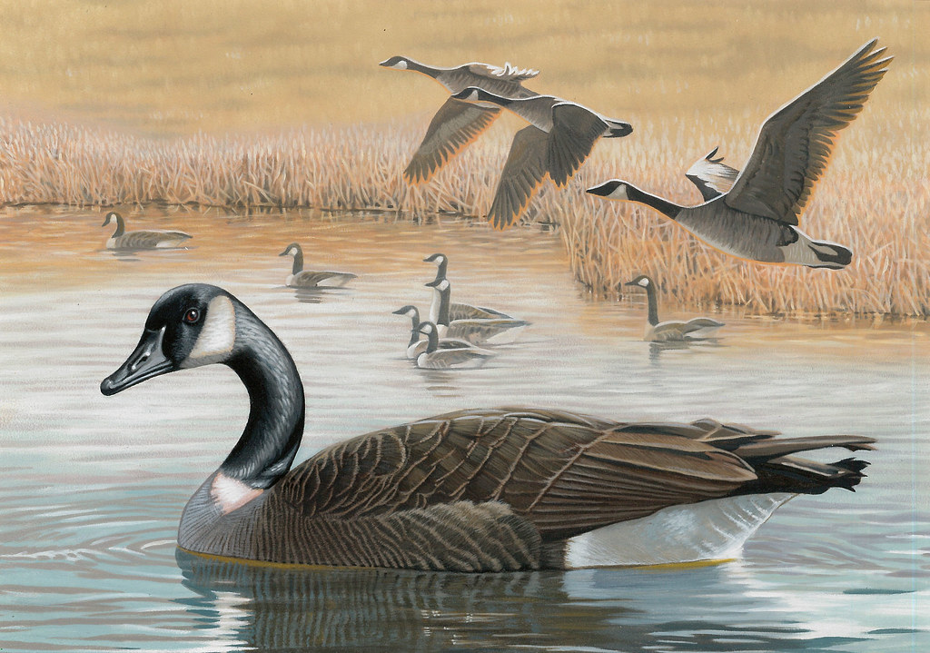 2016fdc016 2016 federal duck stamp art contest entry 16 for Us fish and wildlife