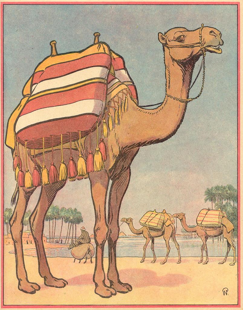 Buff chameau patricia m flickr - Dessin de chameau ...