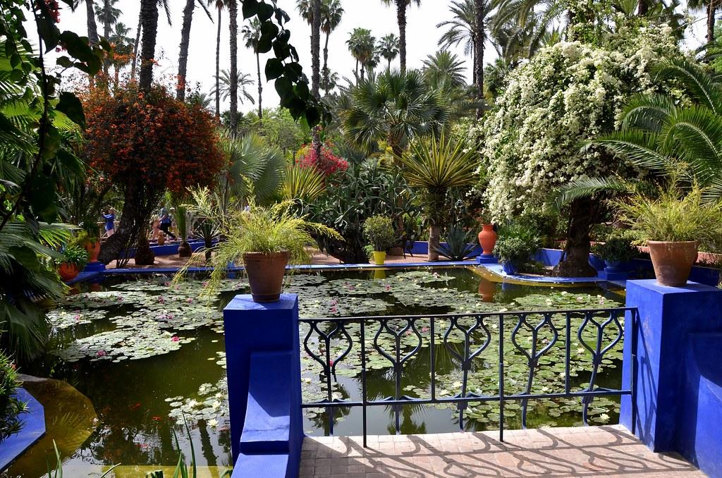 Marrakech maroc jardin majorelle bassin aux n nuphar for Le jardin majorelle