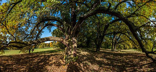 Under the old oak | by cpra