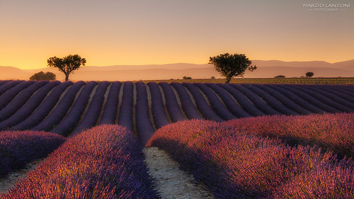 Valensole, sunset | by marzio.lanzoni@libero.it