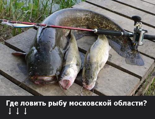 Как ловить рыбу на оке весной и на что