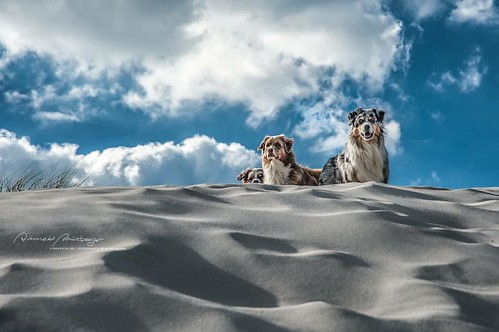 dogumented High up to the sky ❤️#sky...