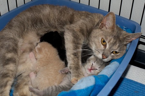 Suzette and babies | by Goathouse Refuge