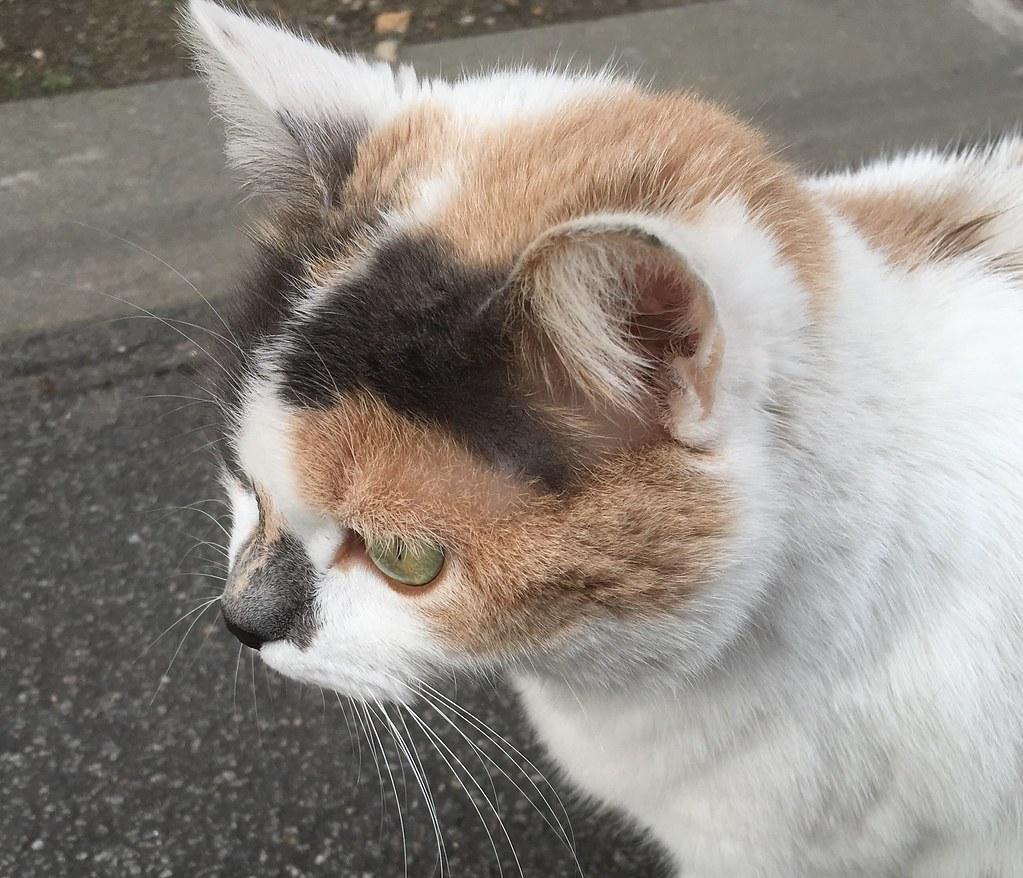 jeune chatte mignonne