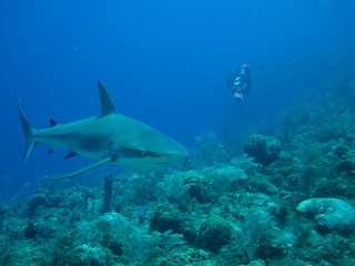 Hamilton Island Diving Wetsuit Reccomendation