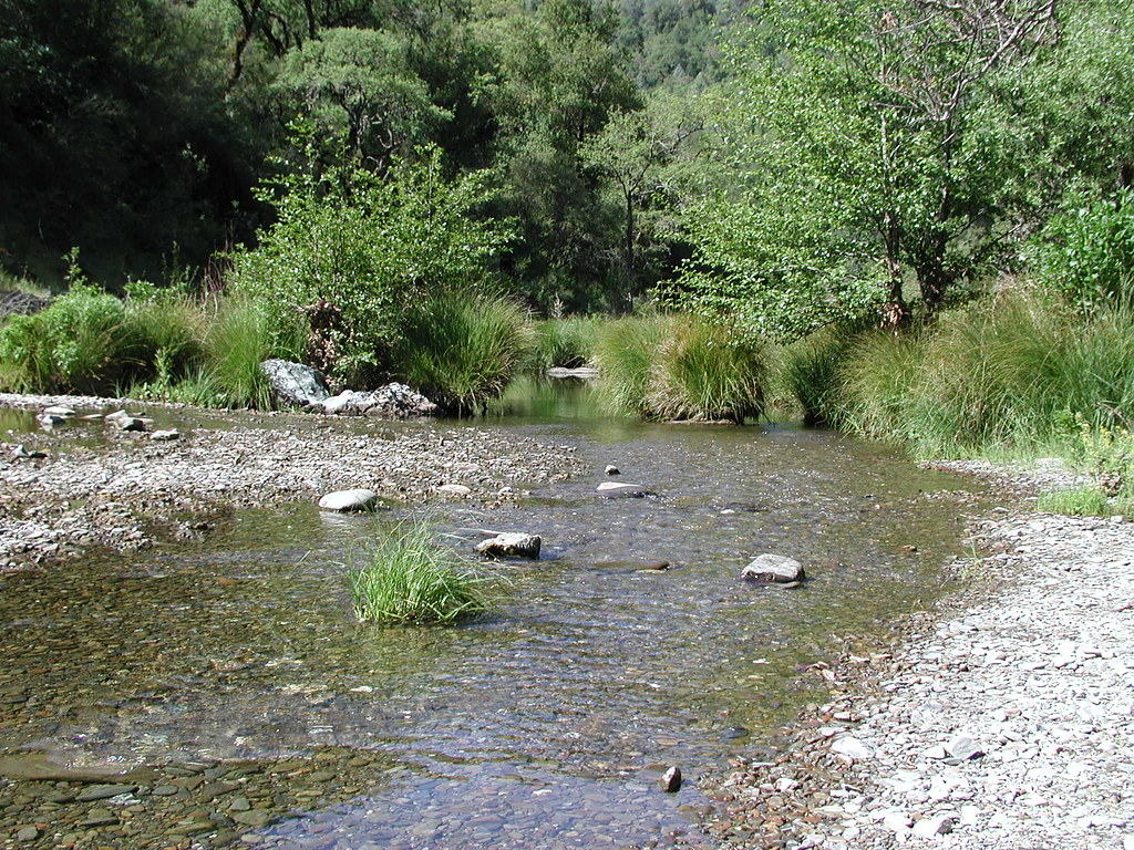 Henry W. Coe State Park | Henry Coe State Park, Morgan ...