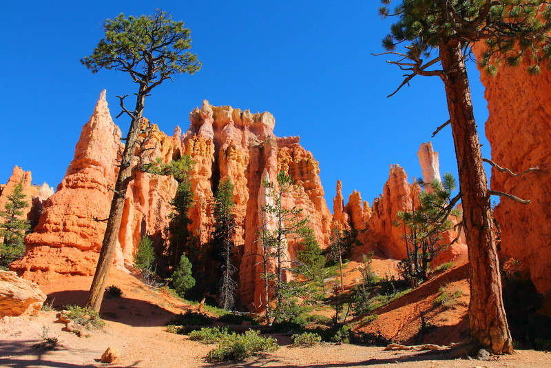 IMG_8935 Queens Garden Trail, Bryce Canyon National Park