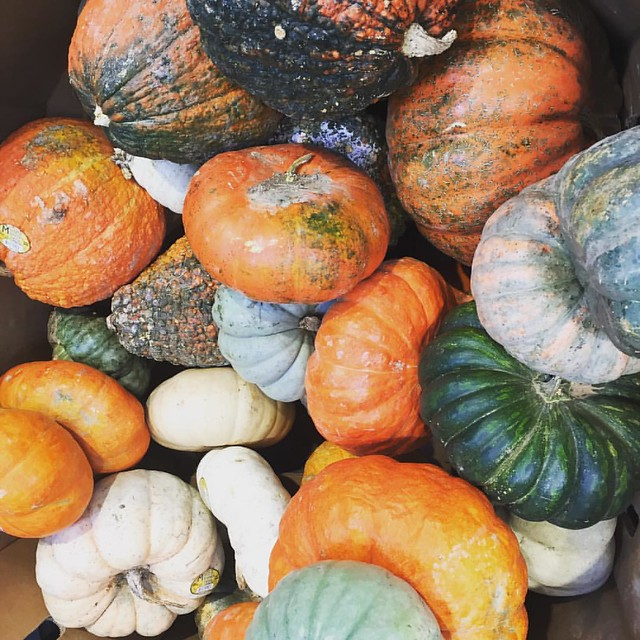 It's decorative gourd season!