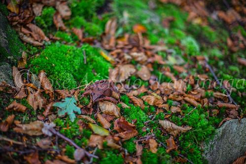 Parque Natural de #Gorbeia #DePaseoConLarri #Flickr      -1483
