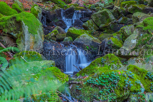 Parque Natural de #Gorbeia #DePaseoConLarri #Flickr      -1442