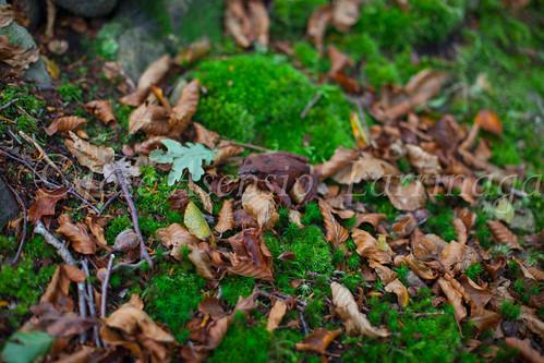 Parque Natural de #Gorbeia #DePaseoConLarri #Flickr      -1482