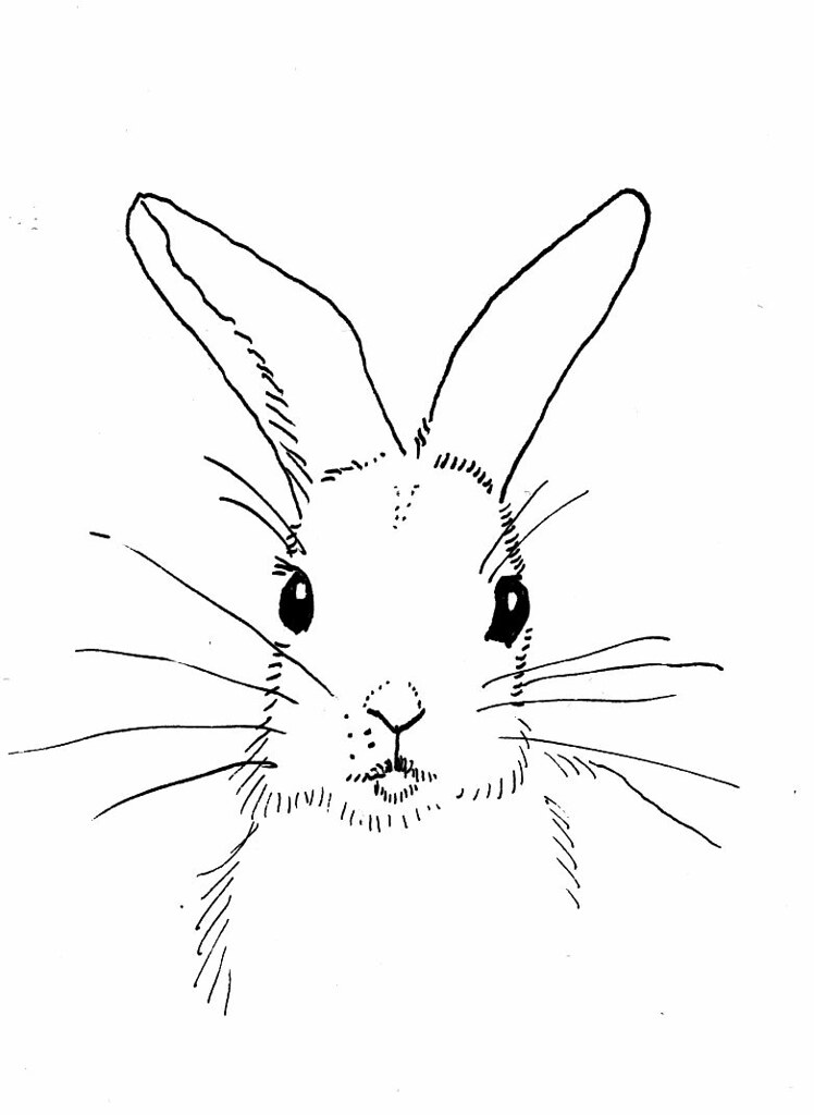 rabbit outline looking forward | Dru | Flickr