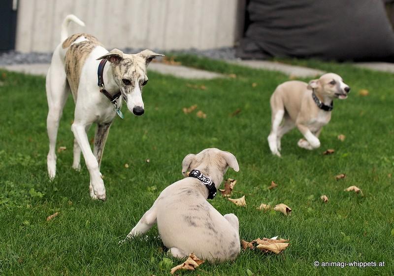 Otis gegen Kiki, ich glaub sie sind sich beide etwas unsicher!