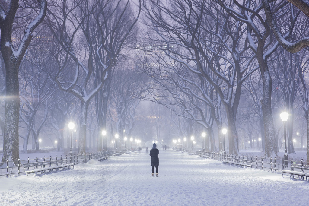 Blizzard Of 2015 In Central Park New York City Follow My