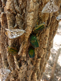 butterflies beetles tree