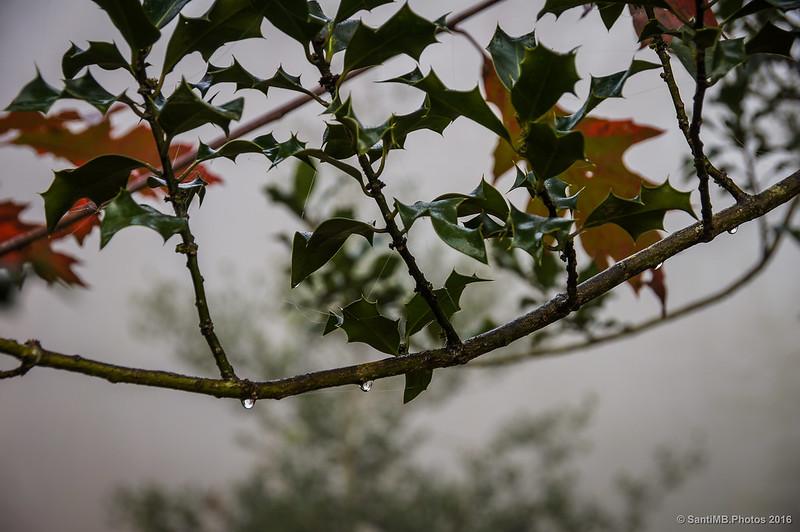 Niebla condensada
