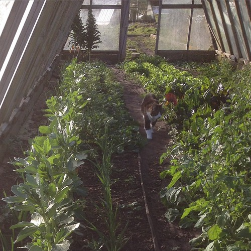 In fact the whole of this greenhouse is looking pretty blinkin' impressive! My trusty assistant Mabel agrees and she's hard to impress, I can tell you. If you fancy having a gander yourself then please come along this Saturday 14 March. We're having a vol | by Lisa Margreet