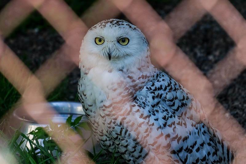 A Visit to the Orphaned Wildlife (OWL) Rehabilitation Society
