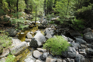 Forest Mountain Stream TWBF DSC_9666 | by www.thewhitebutterflyfund.com
