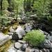 Forest Mountain Stream TWBF DSC_9666