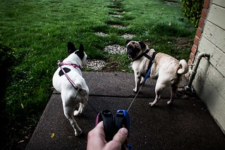 Walking Molly and Norman | by Kevin Cortopassi