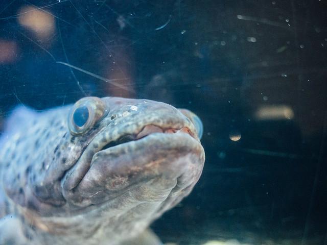 160810_takeshima_aquarium-6