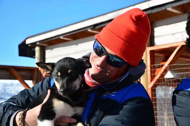Sele con un perro de trineo (Laponia Noruega)