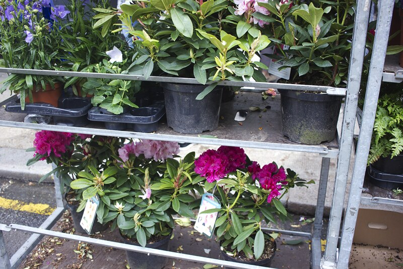 columbia road, columbia road flower market, colombia rd, colombia road, london flower market, flowers, florals