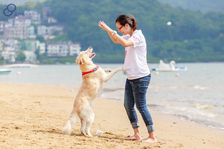 Dogs can be the perfect companion animal | by Animals Asia