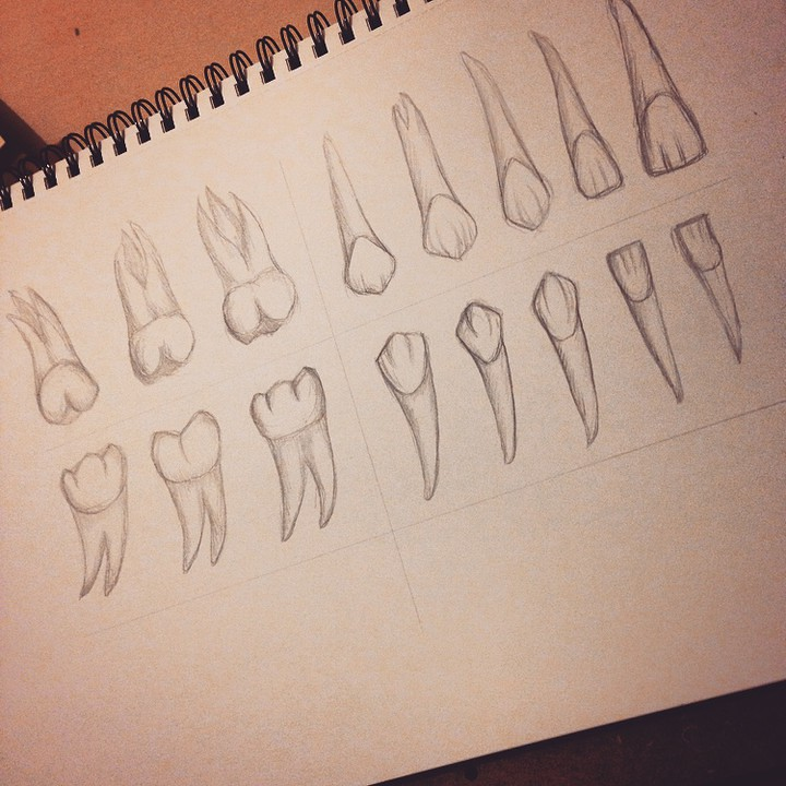 Dents be drawing dentition ✏ 🙈 Working on some new ideas.… | Flickr