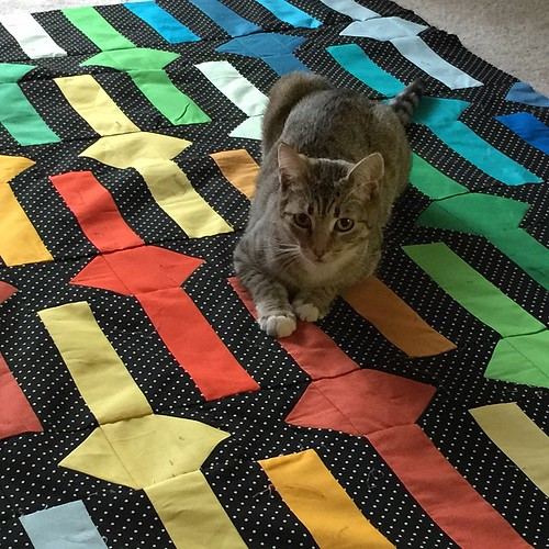It's already been inspected and approved. #kittysupervisor #beltsandbucklesquilt @rebelcraftmedia @tensionissues | by zaydia {modernbias.com}