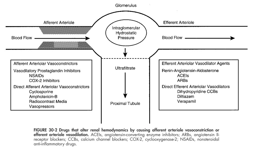 FIGURE 30-2 Drugs that alter renal hemodynamics by causing… | Flickr