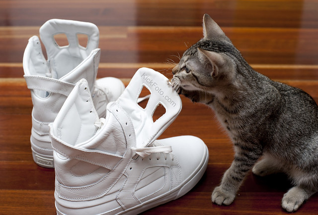 Supra White Shoes Online India