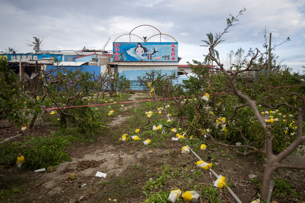 2016.07.10尼伯特颱風過境後,造成蘭嶼農作受損。圖片來源:總統府(CC BY-NC-ND 2.0)