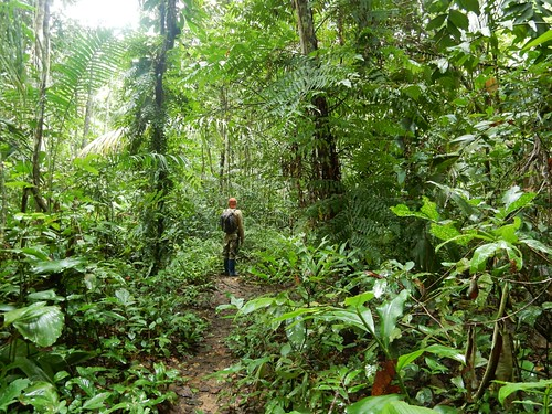 Hike through Madidi National Park - Amazon forest - Bolivia | by pacoalfonso