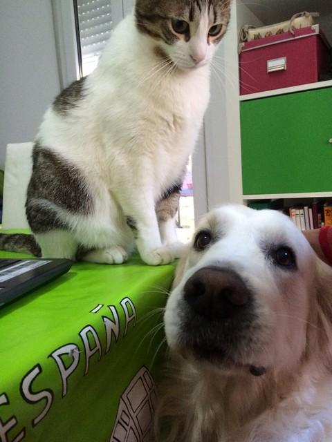 """9º Concurso Fotográfico: """"Como el perro y el gato"""" Fotos participantes 16866046782_ea65cdc130_z"""