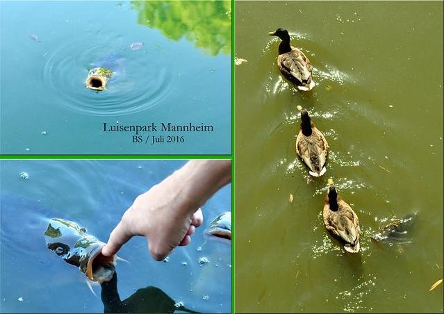 Gartenreisen - Luisenpark Mannheim - Juli 2016 - Impressionen - Fotos und Collagen: Brigitte Stolle 2016
