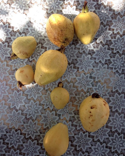 Guavas from my mom's tree