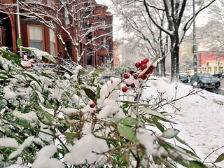 A little bit of color on a snowy day on Rhode Island Av | by Joe in DC
