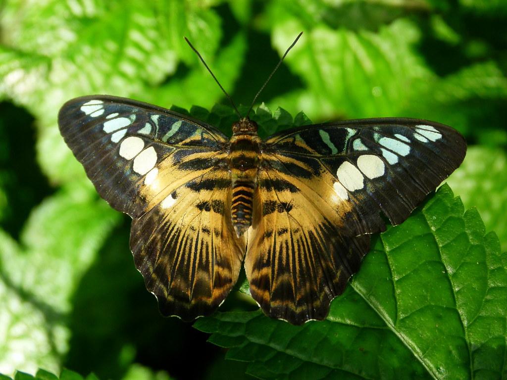 clipper butterfly conservatory niagara falls jim. Black Bedroom Furniture Sets. Home Design Ideas