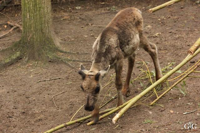 Besuch Zoo Rostock 09.07.201646