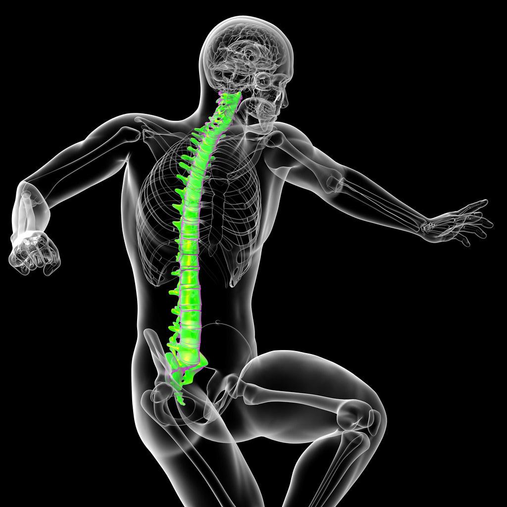 3d ilustración médica de la columna vertebral humana - vis… | Flickr