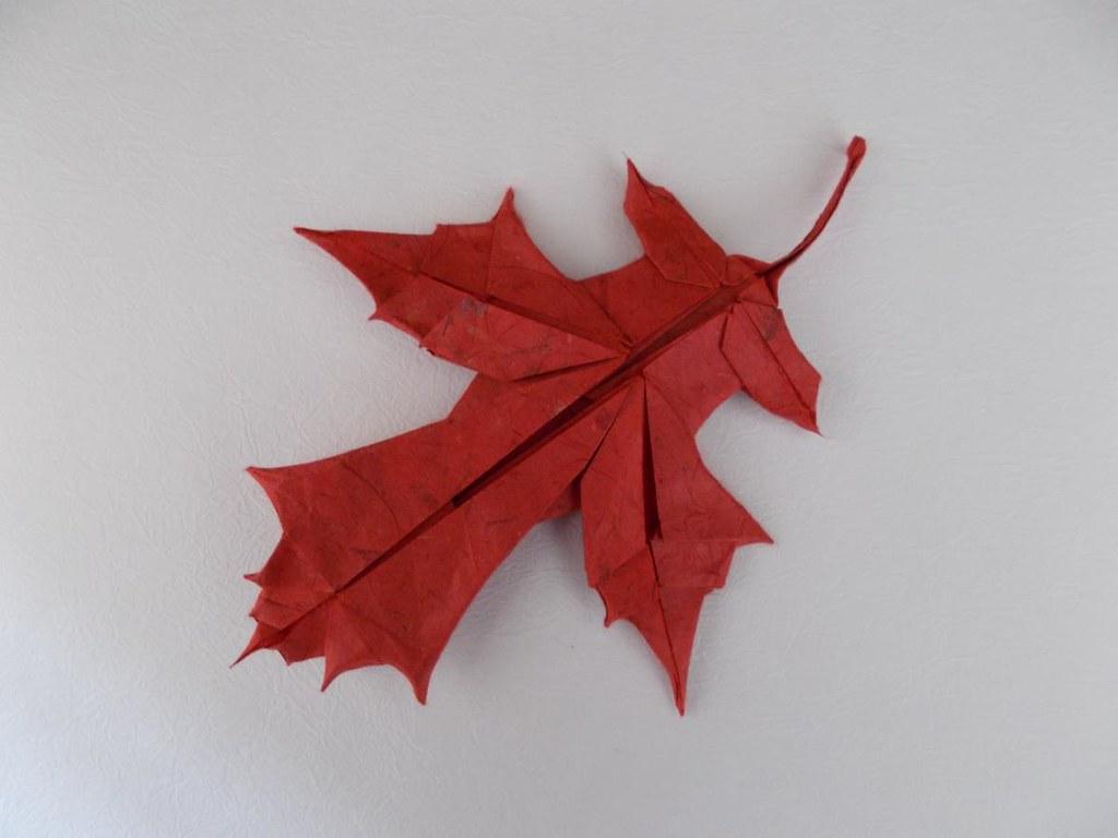 Scarlet Oak Leaf